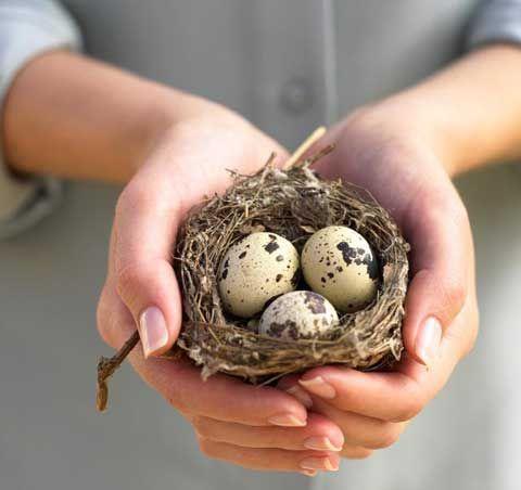 Чим корисні перепелині яйця