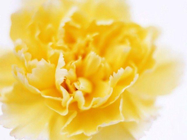 Мова квітів