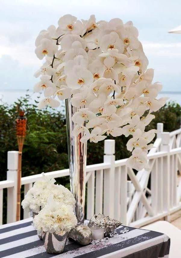 Орхідея фаленопсис в домашніх умовах