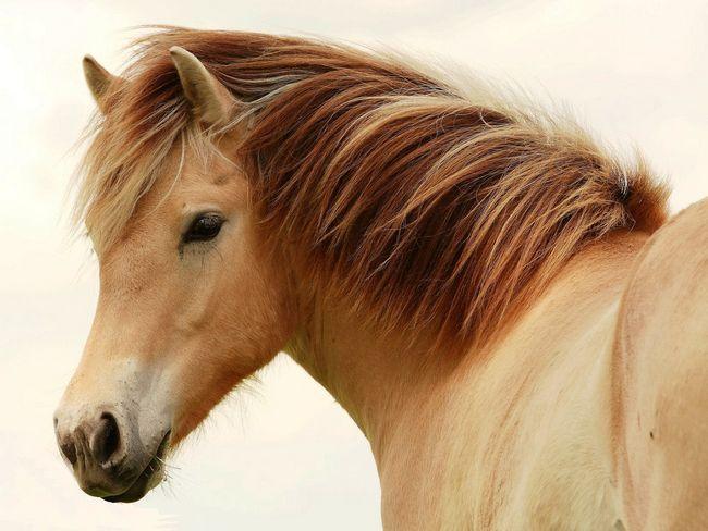 Найкрасивіше тварина