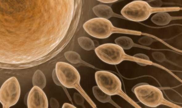Імовірність завагітніти від мастила