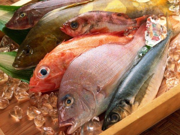 вибір риби